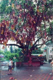 A view of one of the wishing trees