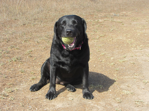 happiest dog on earth