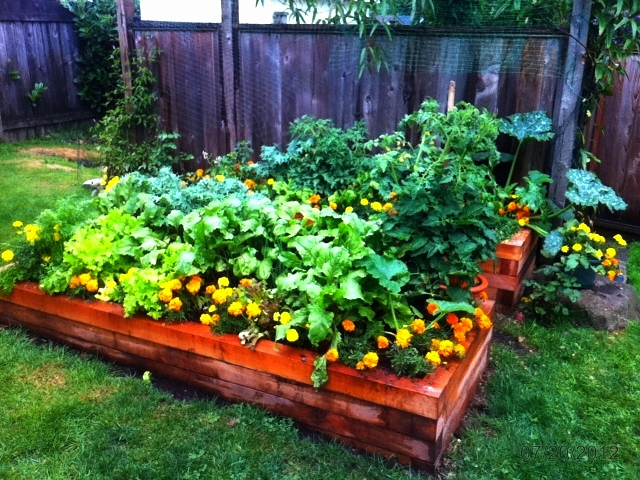 Big, solid raised beds!