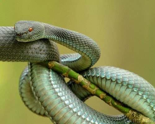 ShorePitViper 11Sep2012x01