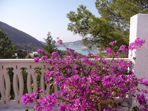 Bougainvillea  at my house by Ginas Pics
