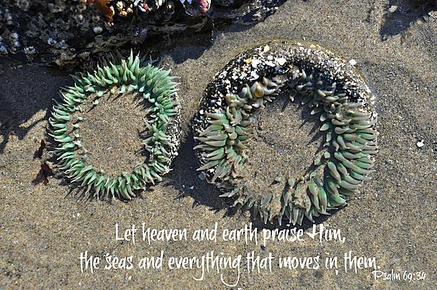 Psalm 69 34.jpg
