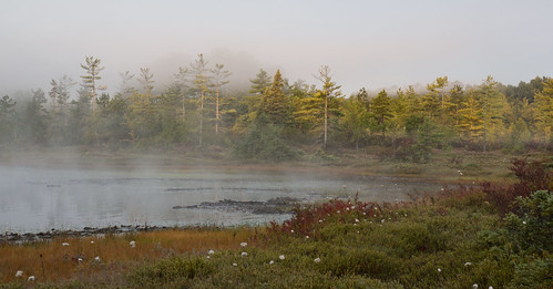 morning sunrise dawn unitedstates newhampshire bog amherst