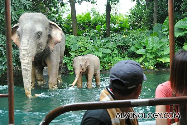 A pair of robot elephants