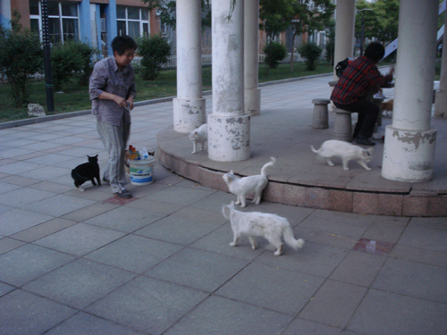 Cats in Shenyang, China _ 0155