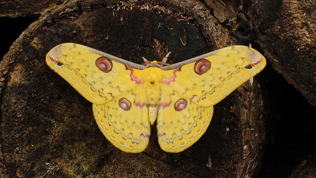 是蛾還是蝶?