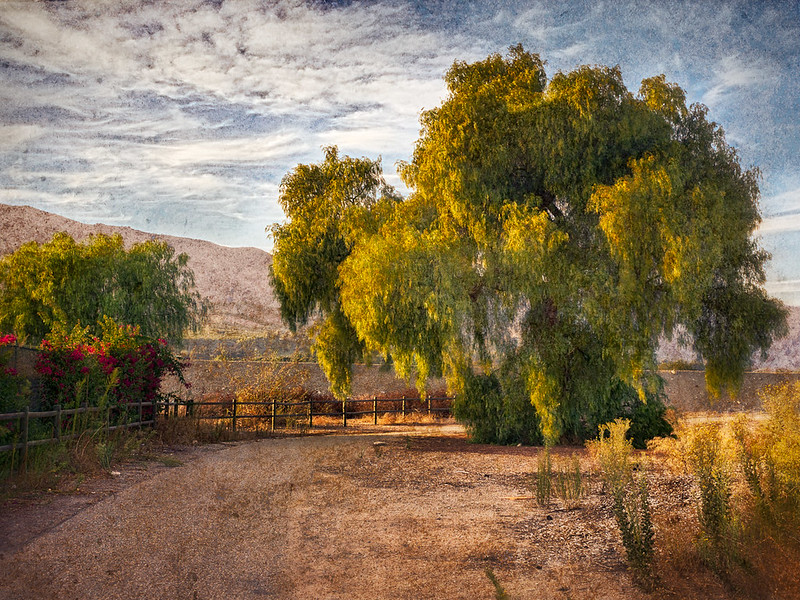 Pepper Tree by the Sespe River • Fillmore, CA 2012