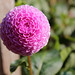 Pink Flower Bulb by MIGreenberg