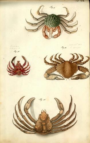 004-Â Versuch einer Naturgeschichte der Krabben und Krebse- 1790- Johann Friedrich Wilhelm Herbst- Humboldt University
