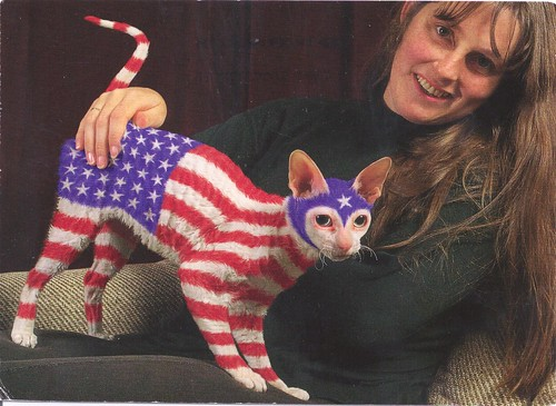 USA Painted Cat