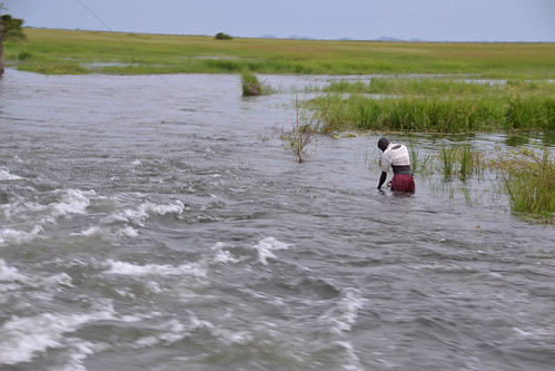烏干達位於Bisina湖旁的濕地。(圖:James Anderson)