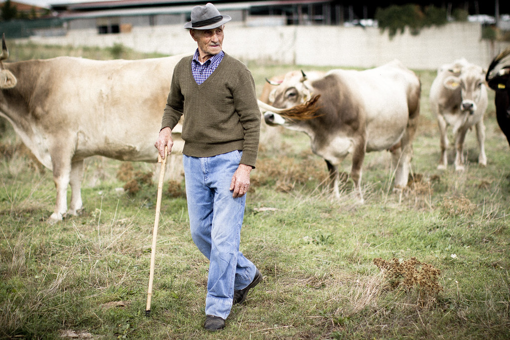 proud cow farmer in Basilicata, Italy2