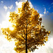 Autumn Tree Sun by Erwin_L