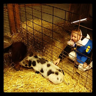 Izzy, petting #pigs at the #pumpkinpatch.