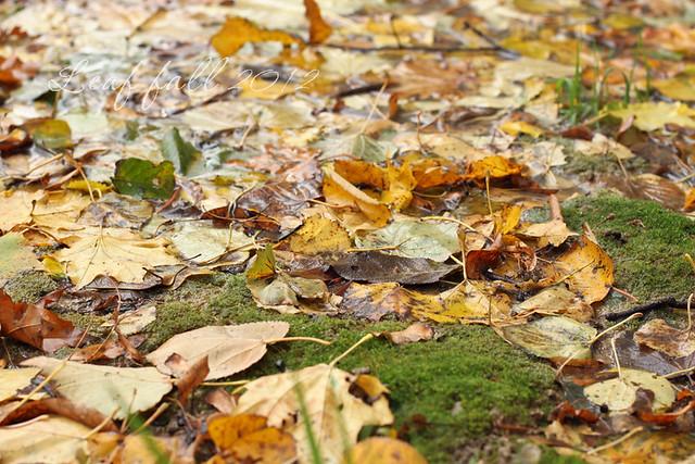 Moscow leaf fall