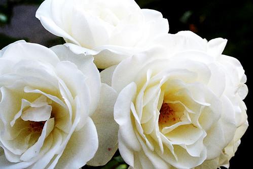 Flores | Flowers | Fleurs | Fiori | цветы
