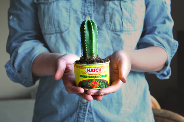 diy mini succulent planter favors