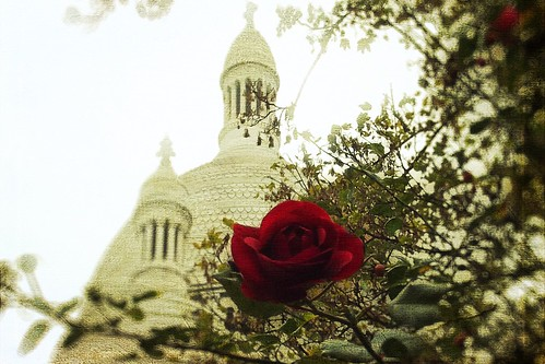 The rose of Montmartre