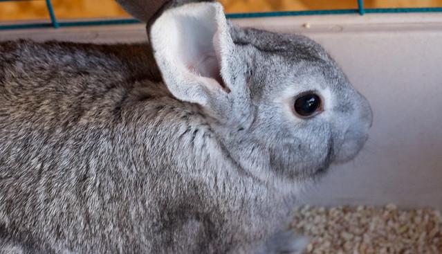 bunny6 (1 of 1)