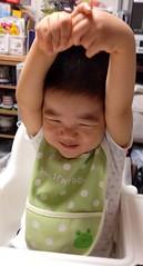 朝食で伸びるとらちゃん (2012/9/5)