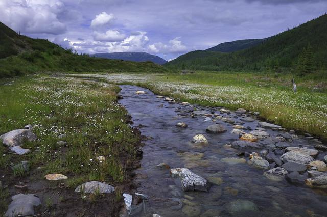 Parque Nacional Denali. Alaska