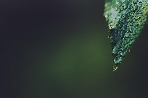 Leaf (Explore #14, 11.09.2012)