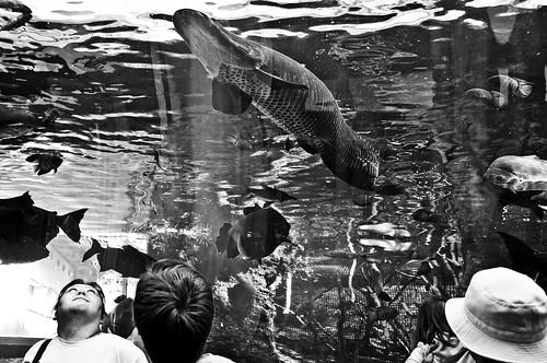 Aquarium 2012