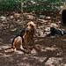 Dog por rwoan