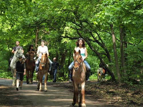 Zfort Group Rides Horses (2011)