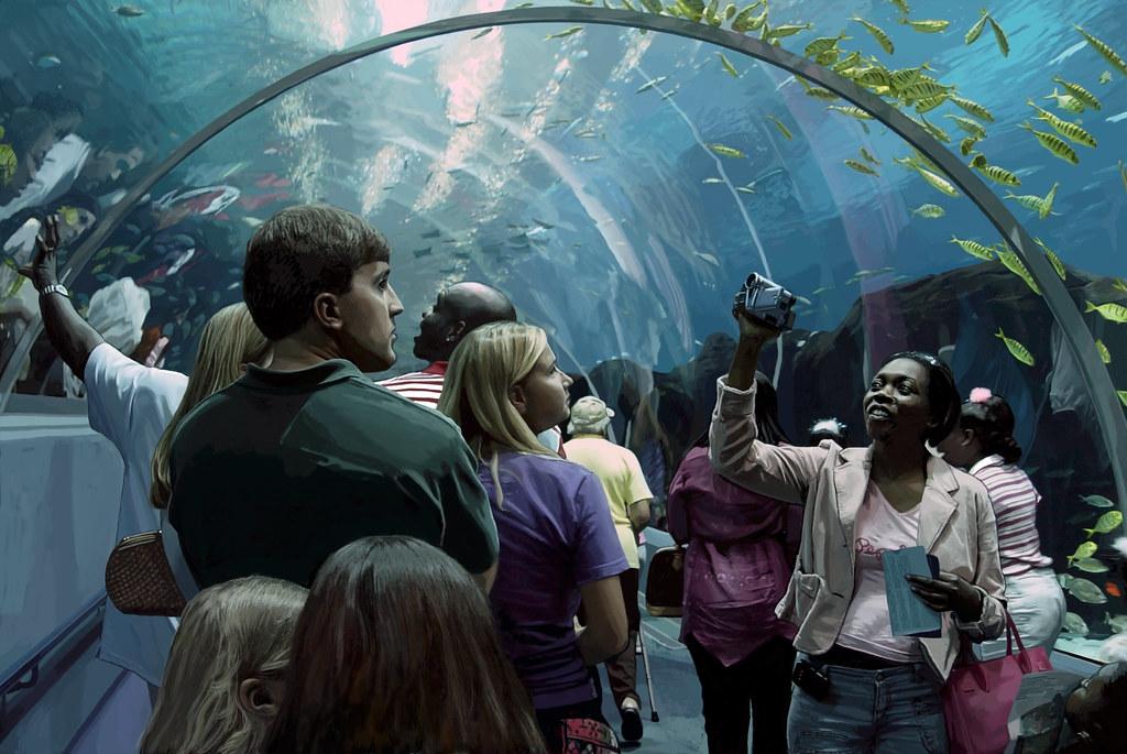 Filming Fish at the Aquarium