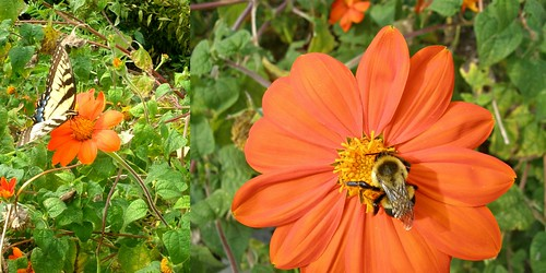butterfly bee collage