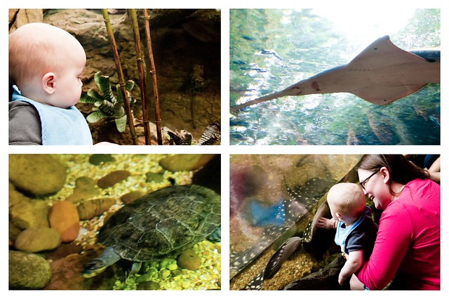 Dallas World Aquarium Collage 2