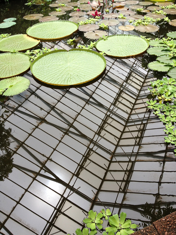glasshouses pond
