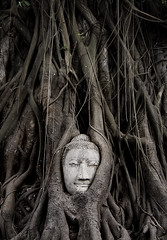 the root of buddhism