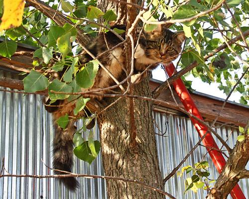 Tux...up a tree.