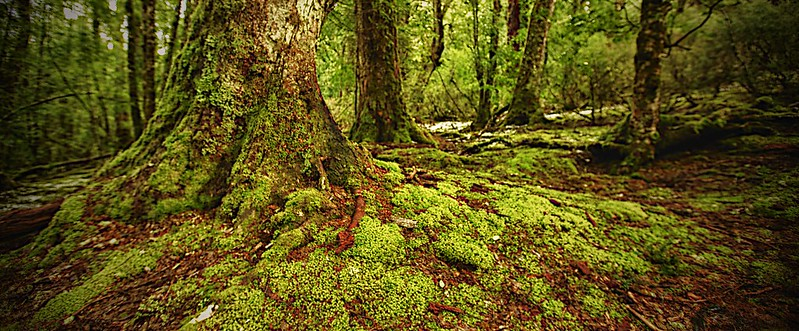 Enchanting Strolls, Tasmanian Wilderness