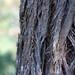 Small photo of Stringy bark