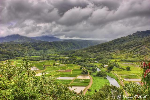 Kauai field