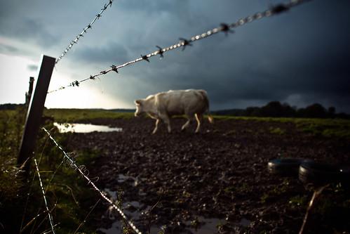 Une vache deux pneus by DoItWasted2
