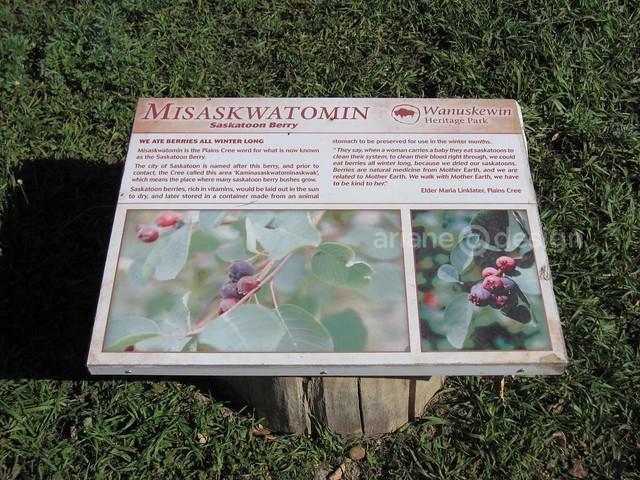 Wanuskewin Heritage Park-7