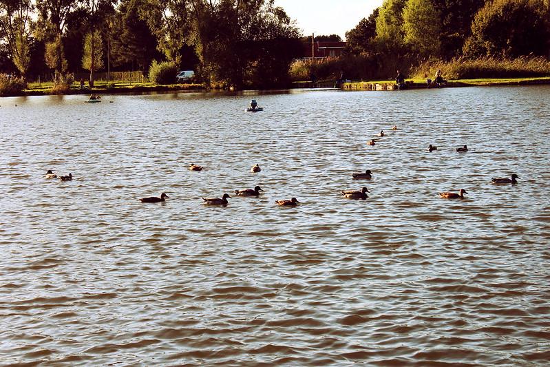sept29 ducks