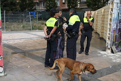 street dog(0.0), animal shelter(0.0), animal(1.0), dog(1.0), pet(1.0), mammal(1.0), police dog(1.0),