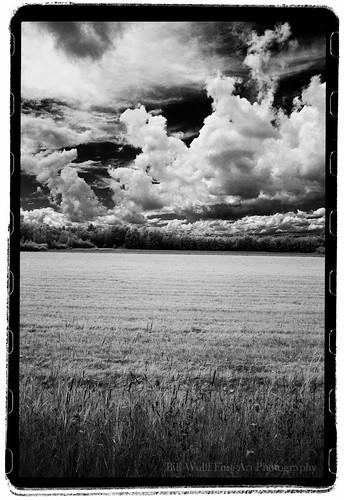 trees field clouds landscape ir maine canonae1 2012 no14 24mmlens rollei400ir