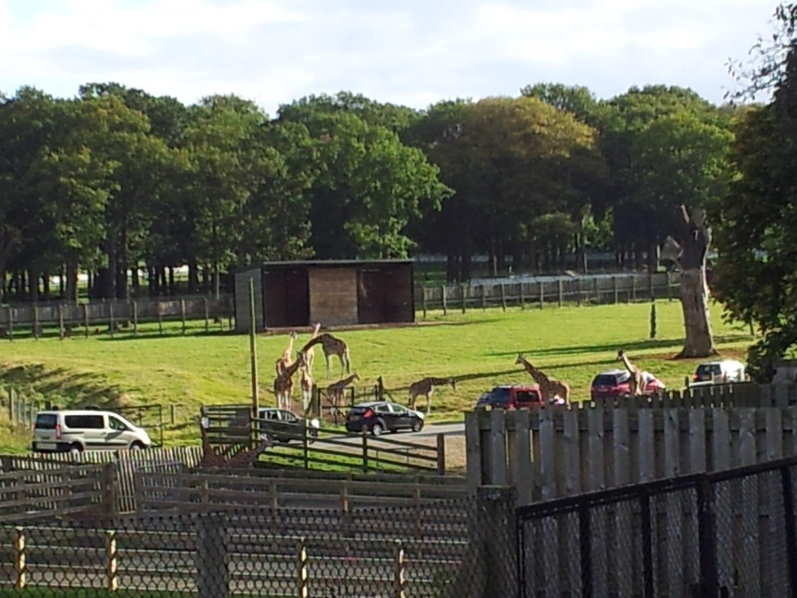 2012-09-29 16.08.00 Giraffes