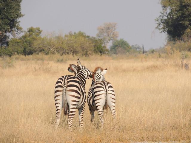 Okavango Delta - Rubencito - 421