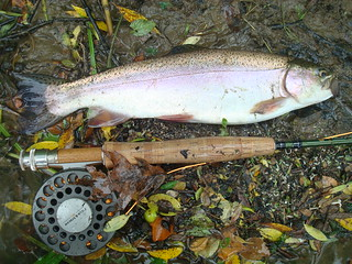 Oil Creek Rainbow