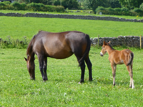 Horse (a mare) and her foal