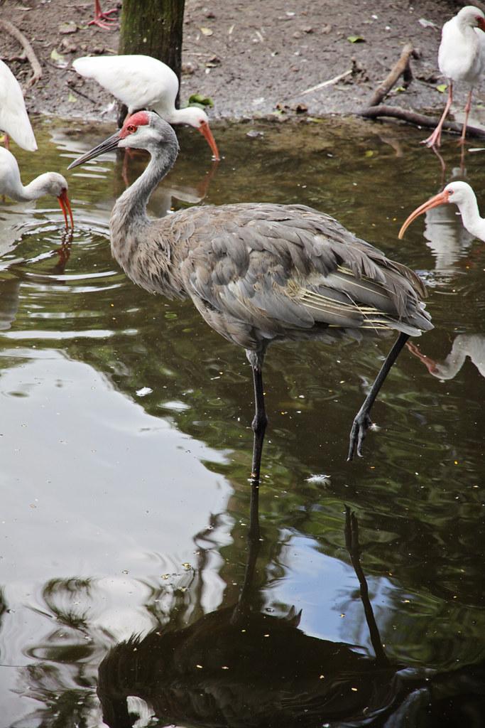 Flamingo Gardens 41