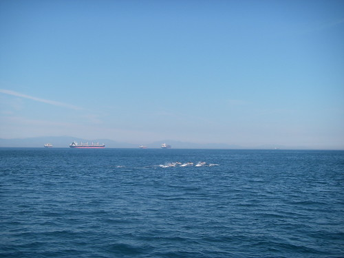 Common Dolphins and Ships