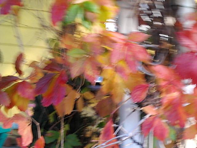 leaves by Cordelia